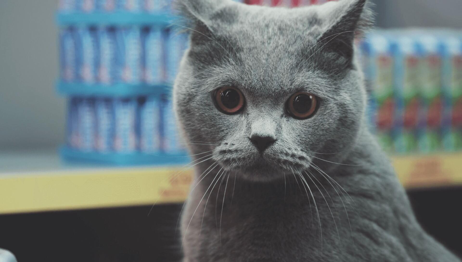 NETTO - Cats